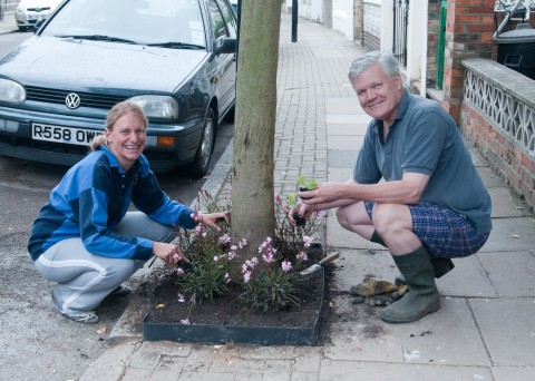 Planting up tree pits