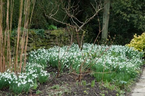 Snowdrops Feb 2011