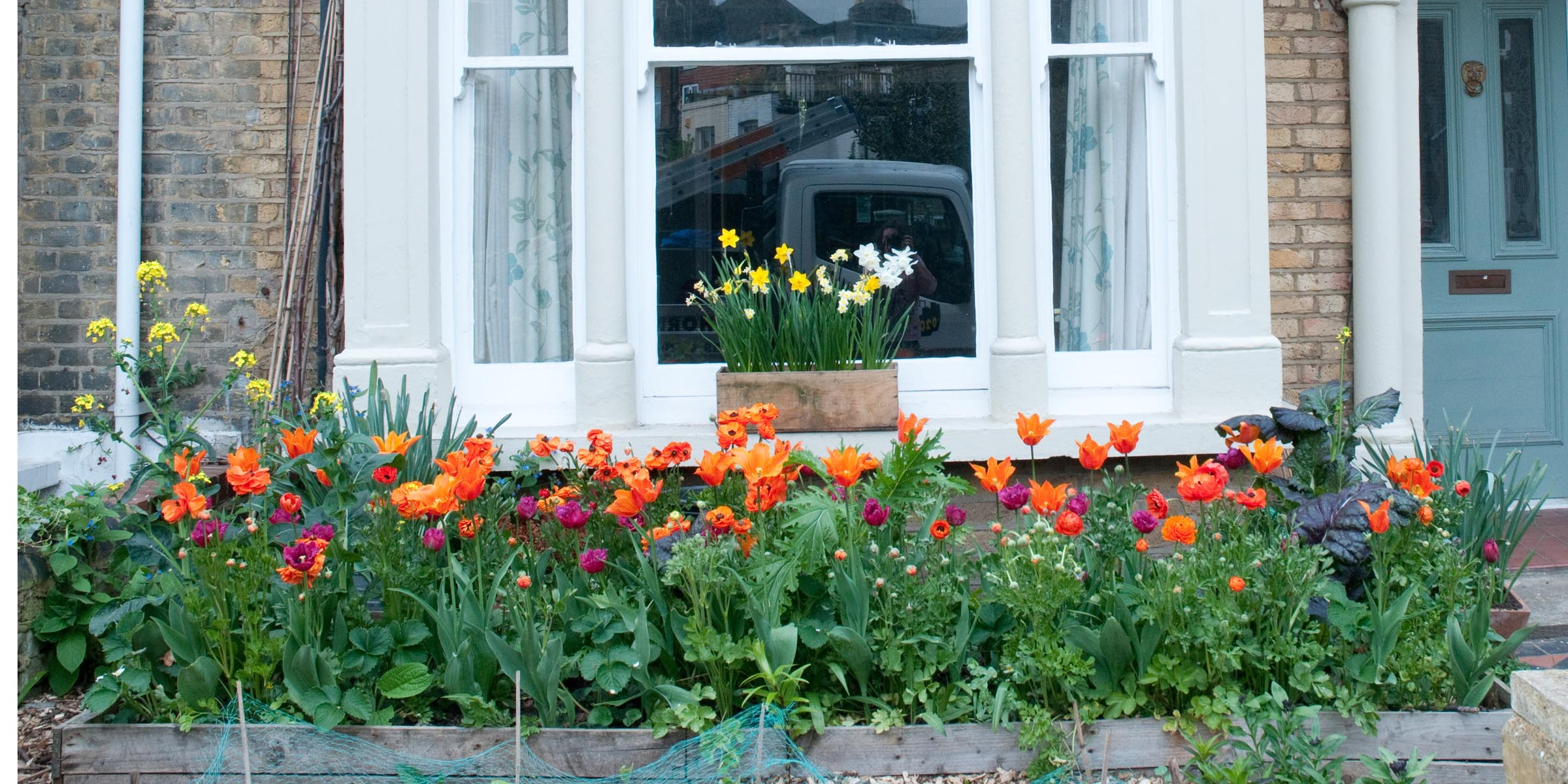 Tulips In Raised Bed