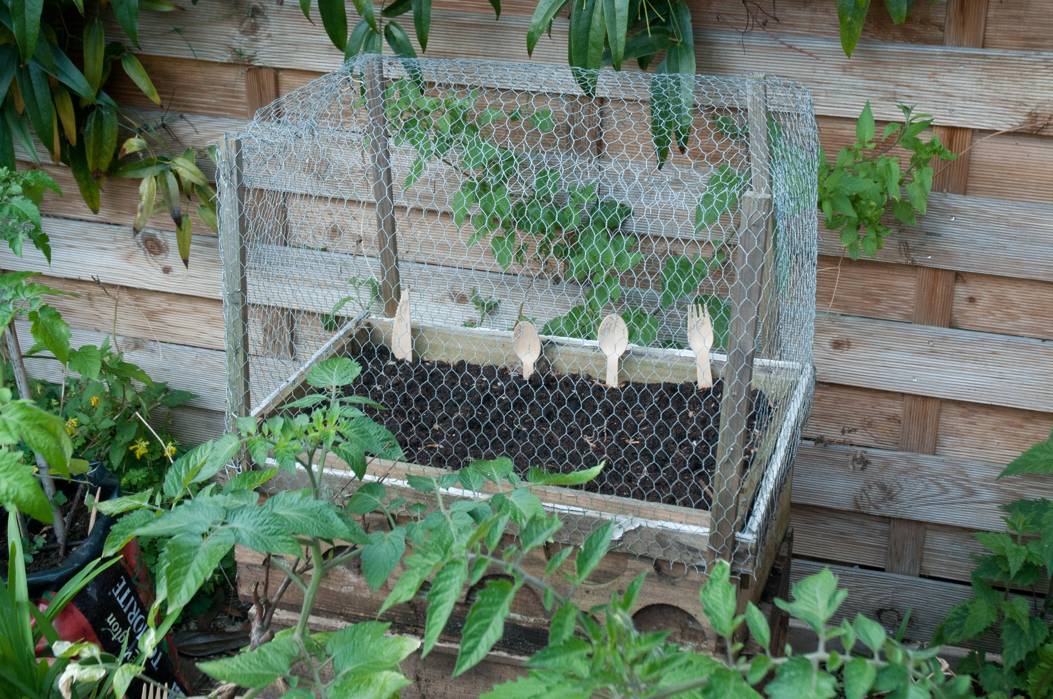 chicken wire cage | Out of my shed