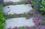 Generosity of Thyme planted betweensteps