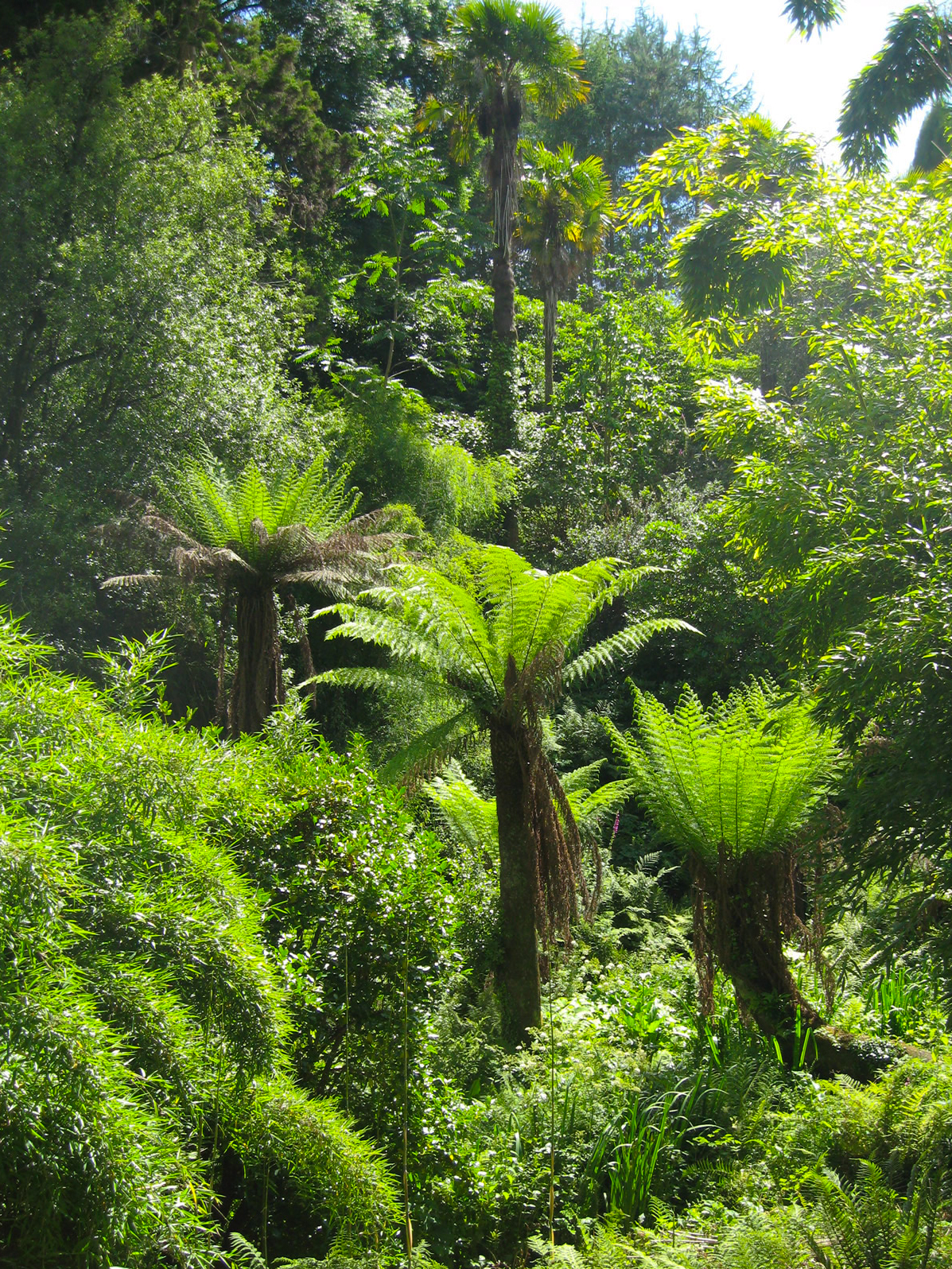 How To Look After A Tree Fern