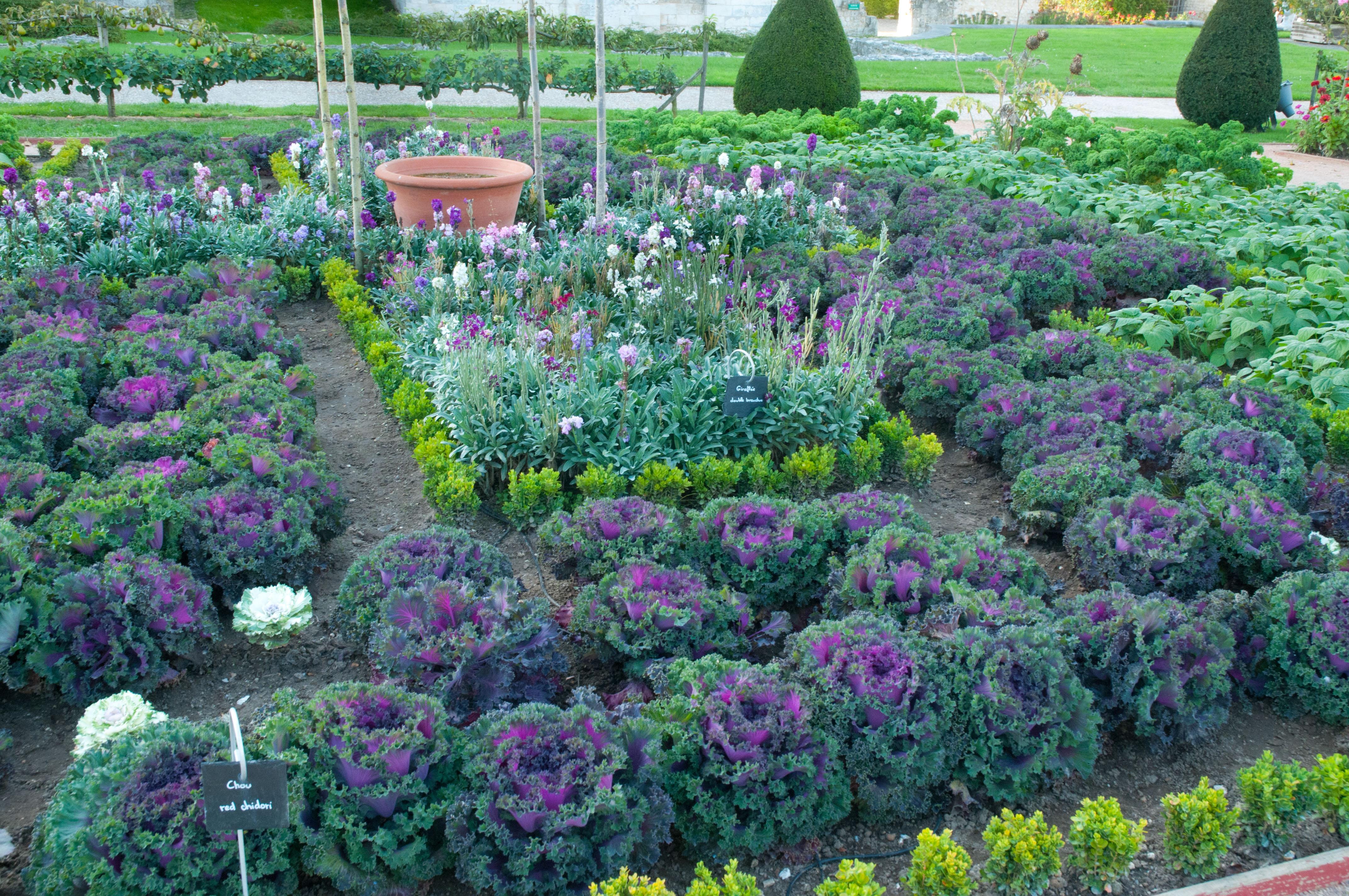 vegetable gardens to visit out of my shed. Black Bedroom Furniture Sets. Home Design Ideas