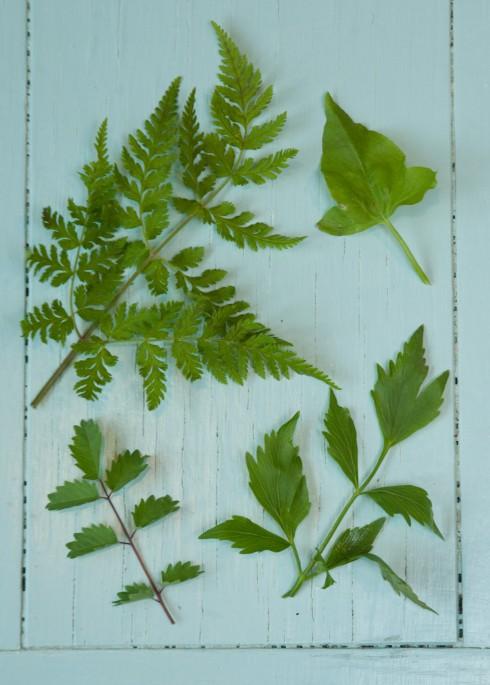 Herb ID