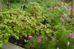 Japanese wineberry monster plant