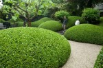 Sumptuously curvy hedging in Amsterdam2
