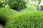 Sumptuously curvy hedging inAmsterdam