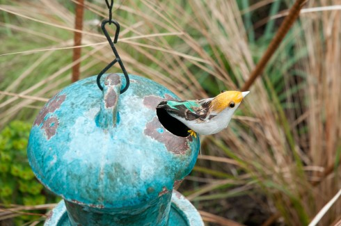 Birds singing out in Deborah Nagan's garden