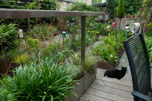Raised beds in Deborah Nagan's garden