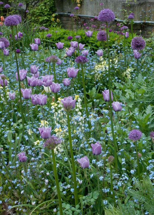 Tulips and alliums at the Inner Temple Garden