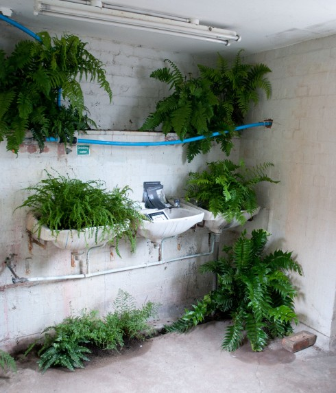 Anmnarose's fernery in the toilet 3
