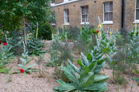Verbascuum in Hare Court by the Inner Temple, EC4 2