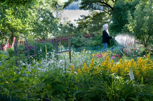 Watering on a stockholm allotment