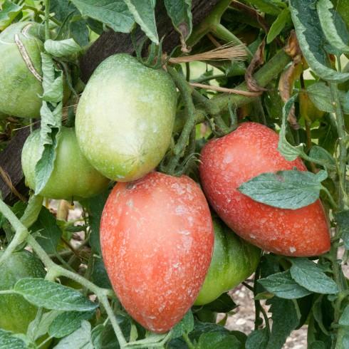 how to ripen fruit fruit brute