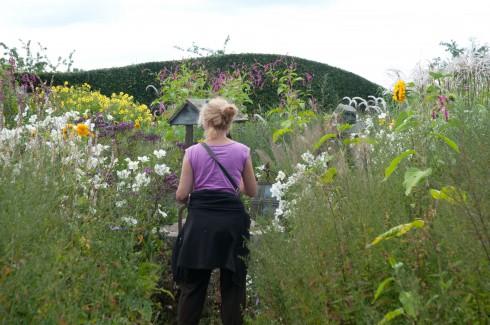 Autmn garden surounding the visitor