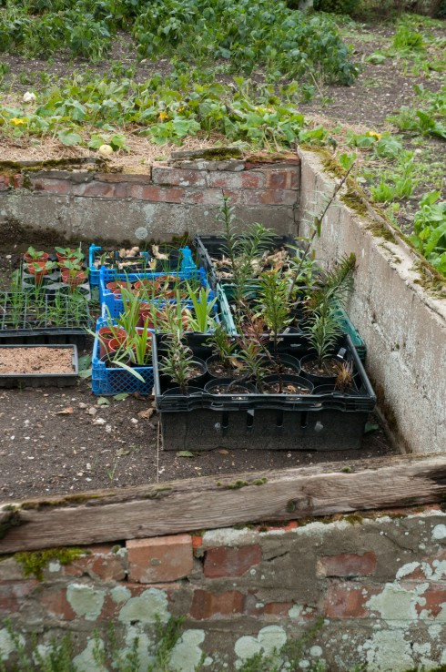 Cold frame in Wiveton Hall Kitchen Garden