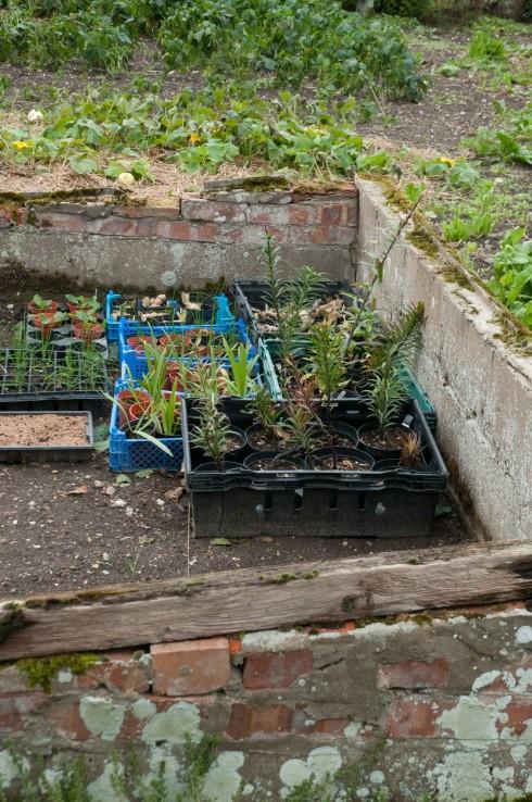 Cold frame in Wiveton Hall Kitchen Garden
