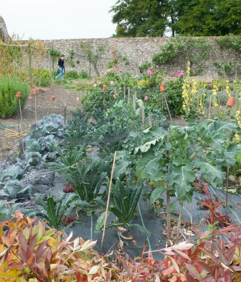 Kale and cabbages in Wiveton Hall Kitchen Garden