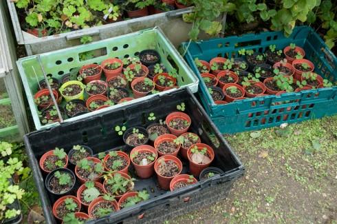 Seedlings at Wiveton Hall
