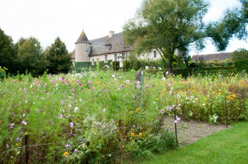 Flower meadow at Priuere D'Orsan