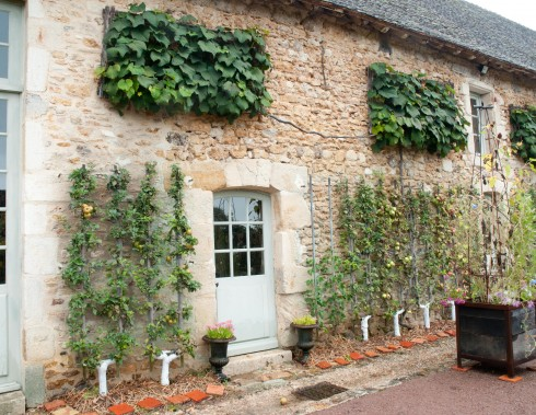 Trained apples and vines at Prieure D'Orsan