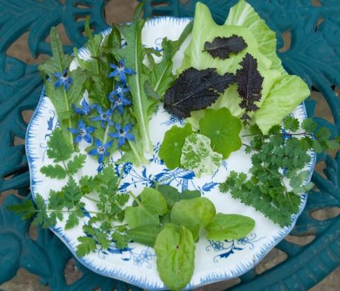 January salad leaves