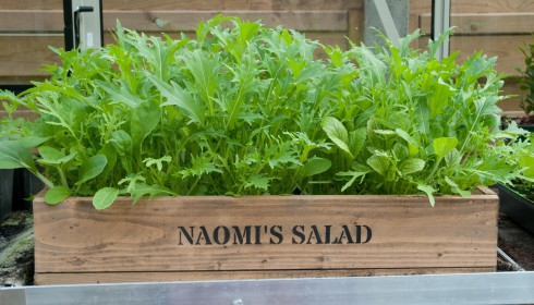 Naomi's Salad