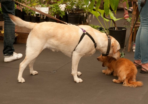 Dogs at Grow London