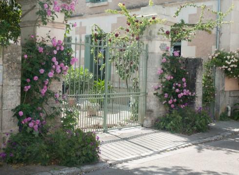 Roses in Chedigny 3