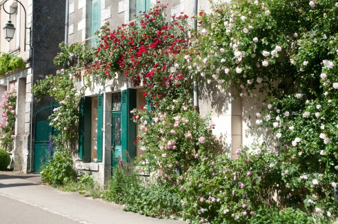 Roses in Chedigny 4