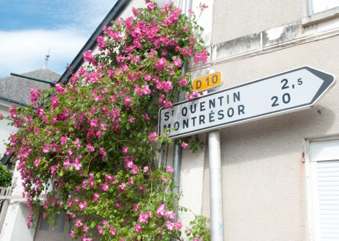 Roses  in Chedigny with arrow