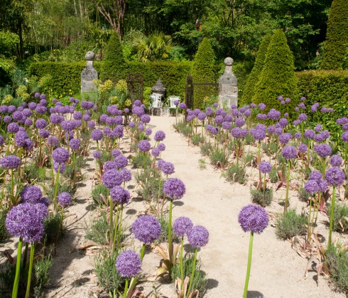 Jardins Agapanthe alliums 2