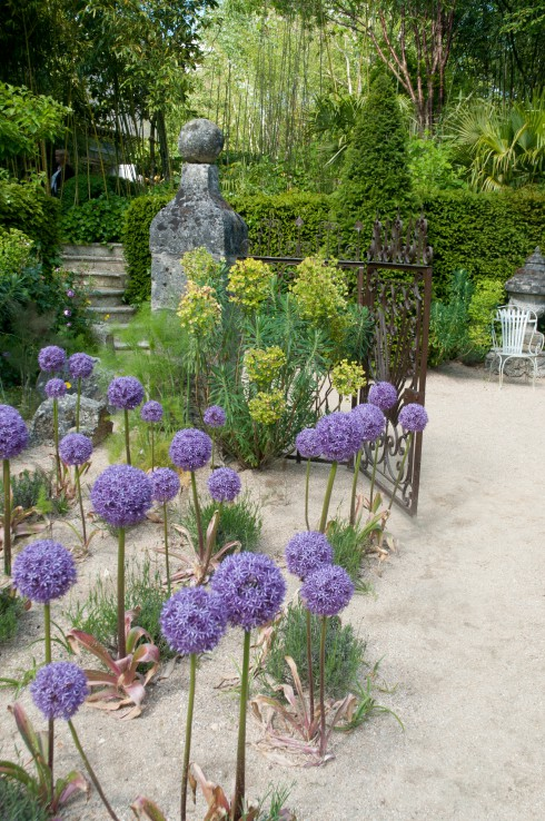 Jardins Agapanthe alliums