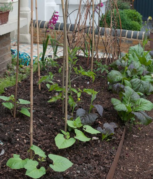 Front garden veg bed with runner beans and tomatoes