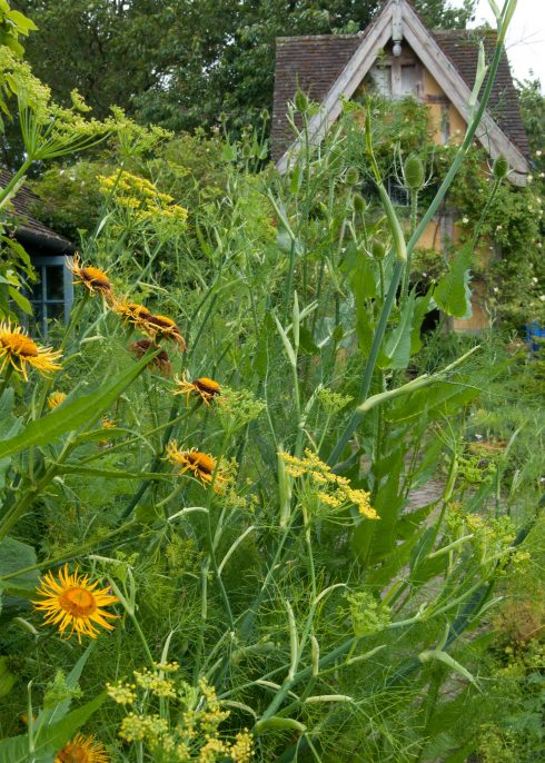 inula-and-giant-fennel-at-bryans-ground-upright