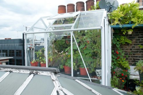 wendy-shillams-rooftop-mini-greenhouse
